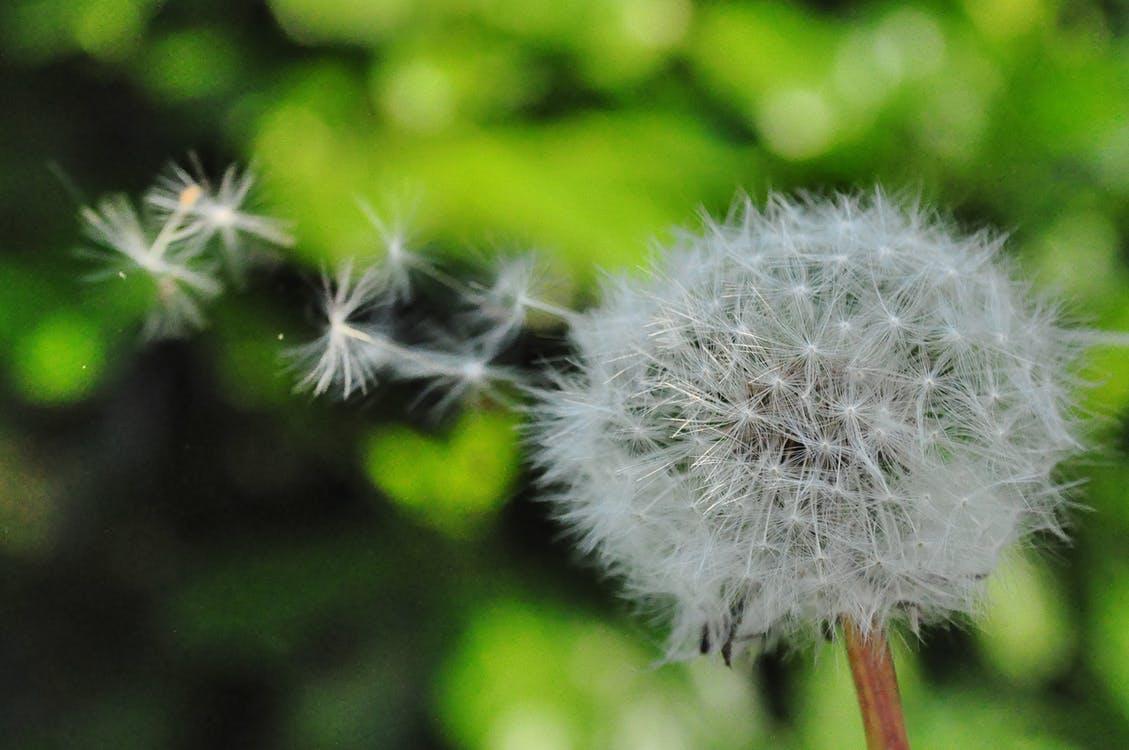 Wiosenna alergia. Instrukcja obsługi