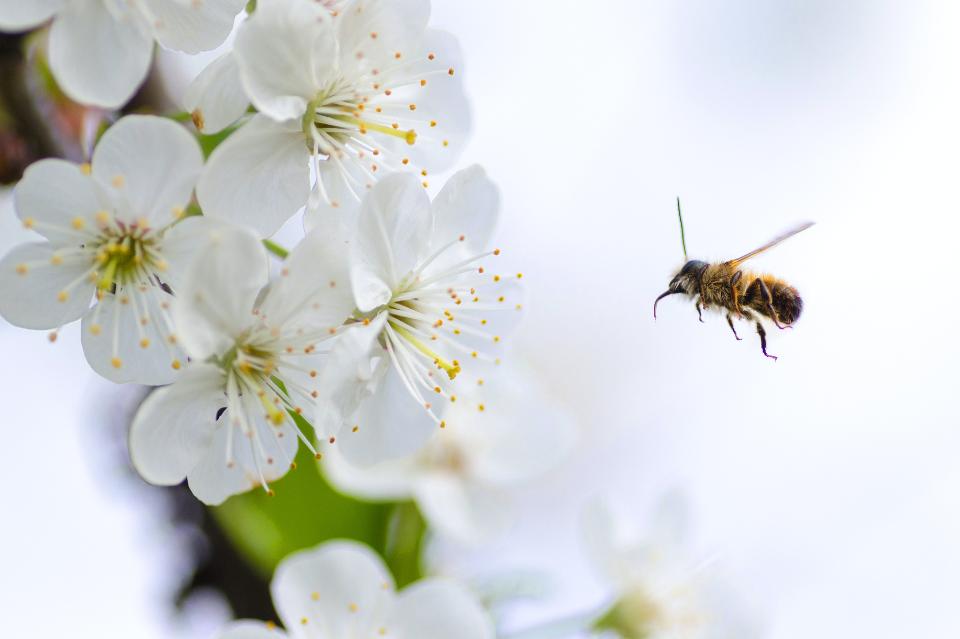 Użądlenie dziecka przez pszczołę