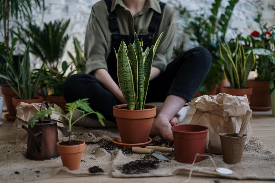 Po co w mieszkaniu rośliny?