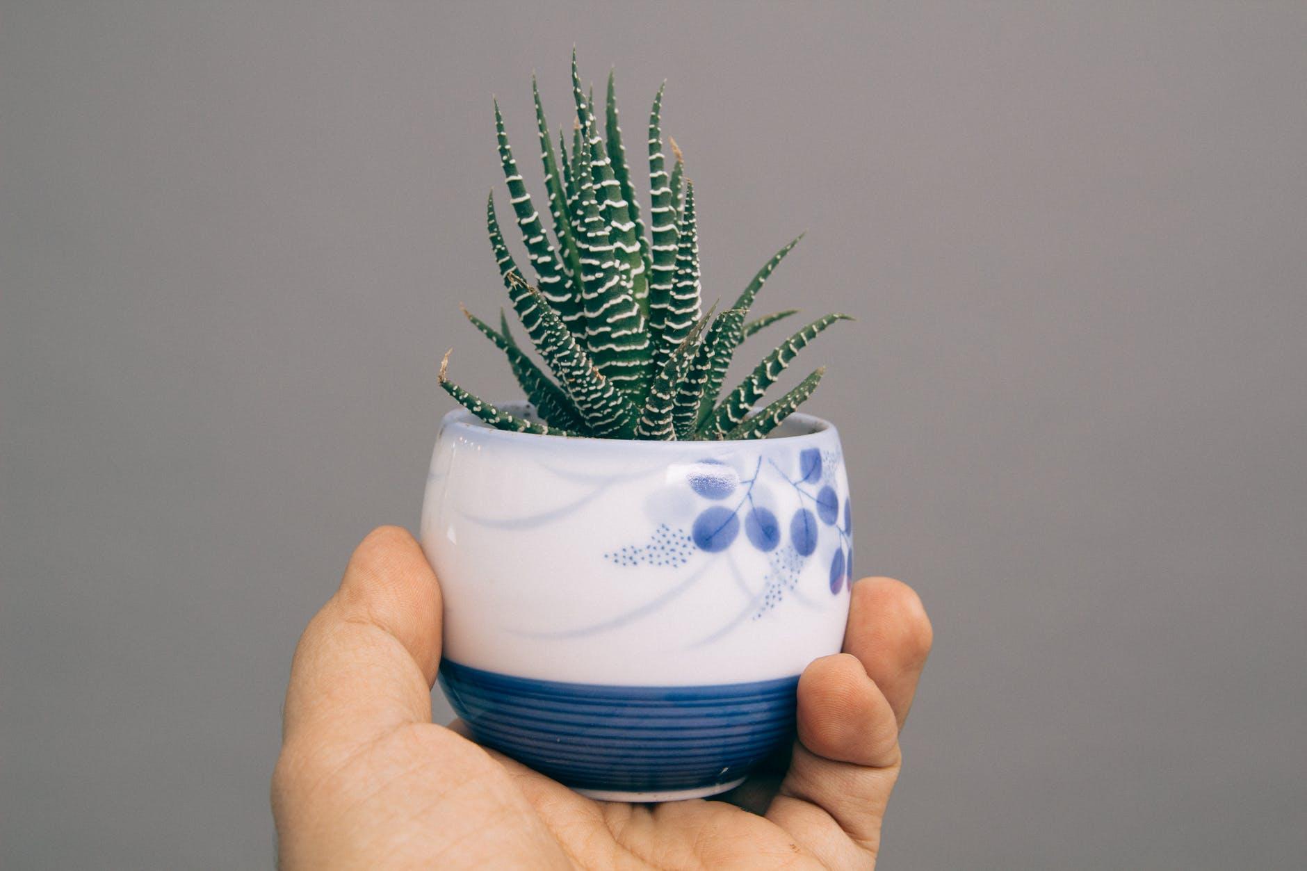 Aloes w Twojej kosmetyczce